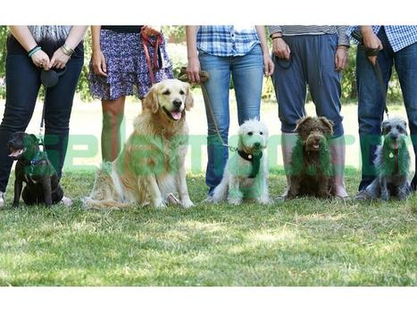 Dog Trainers.Terry Cook offers various b...