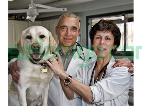 Puppy Wellness Program in New Paltz