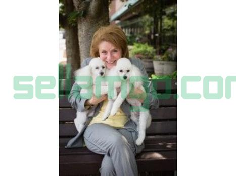 Pet Spa & Dog Grooming Services in M...
