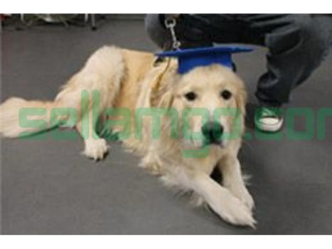 Albany Obedience Dog Training